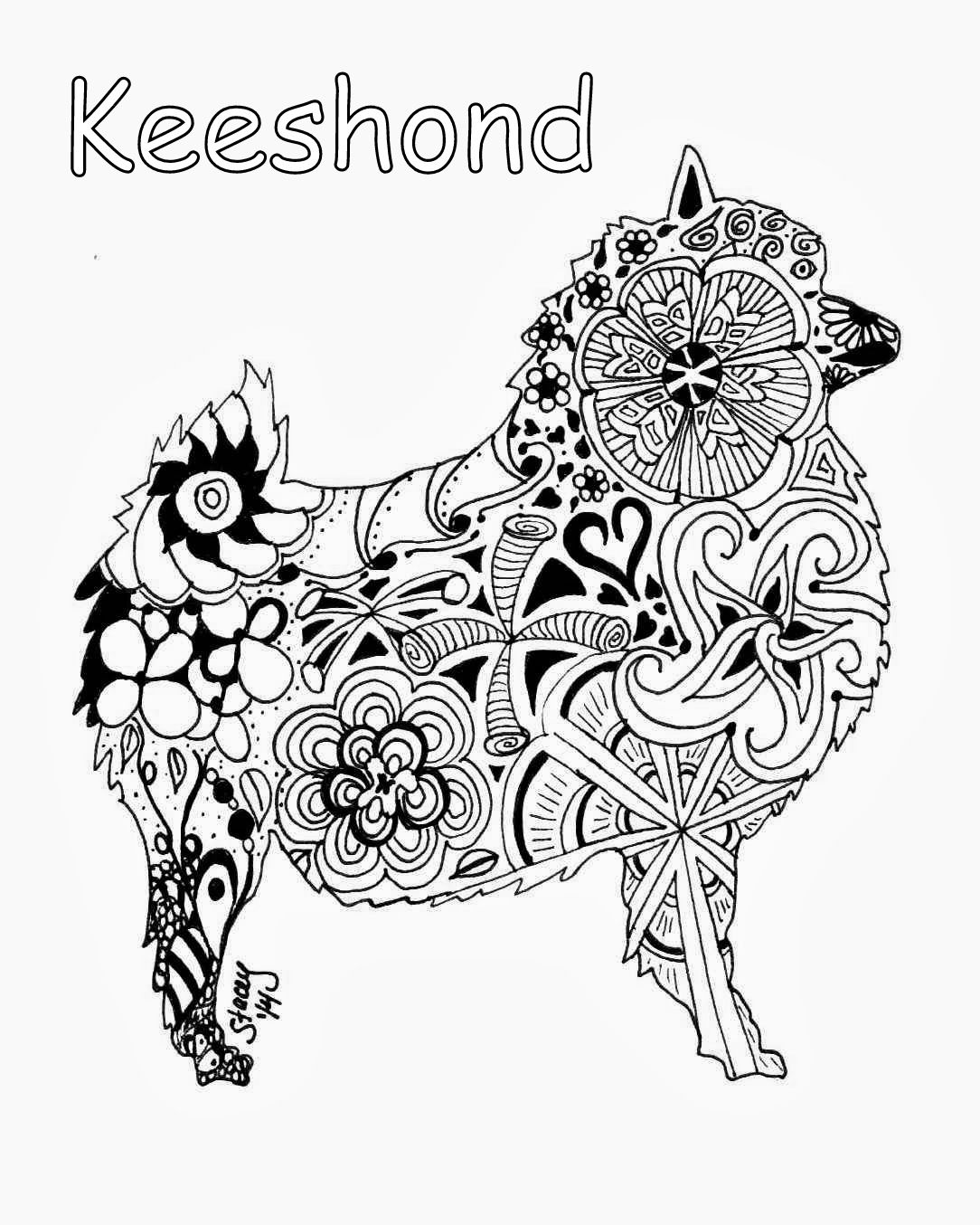 keeshond coloring page tobee and sunny pinterest dog