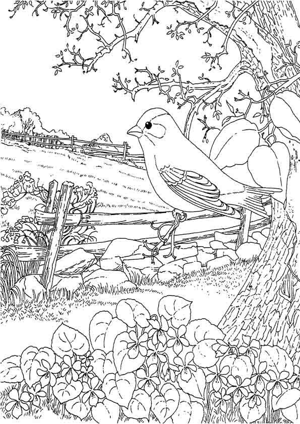 Goldfinch And Blue Violet New Jersey State Bird Coloring Page From Category Select 20946 Printable Crafts Of Cartoons Nature Animals