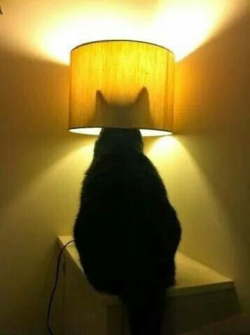 The new cat signal?