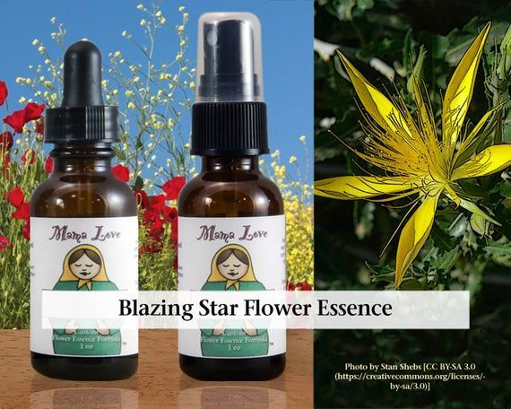 Blazing Star Flower Essence 1 Oder 2 Unzen Pipette Oder Spray Aura Mist Fur Eine Starke Essence Aura Spray