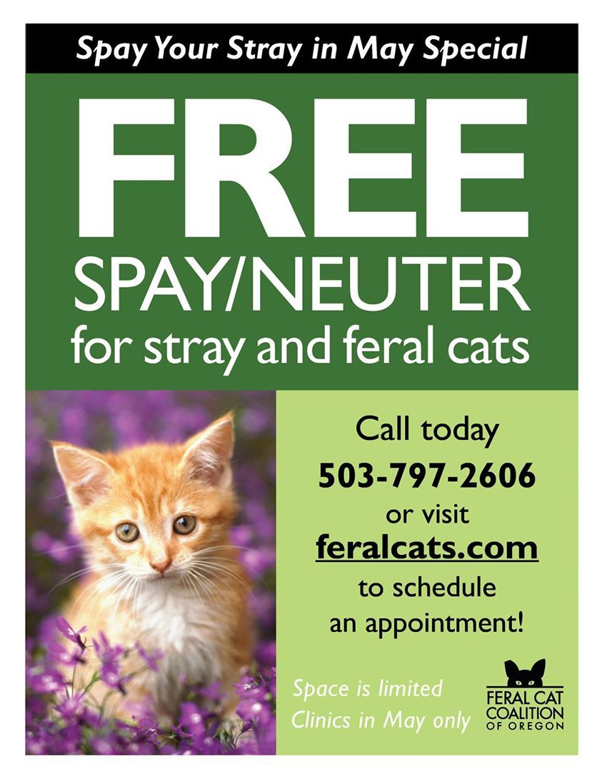 Spay Your Stray in May! Great idea, especially because