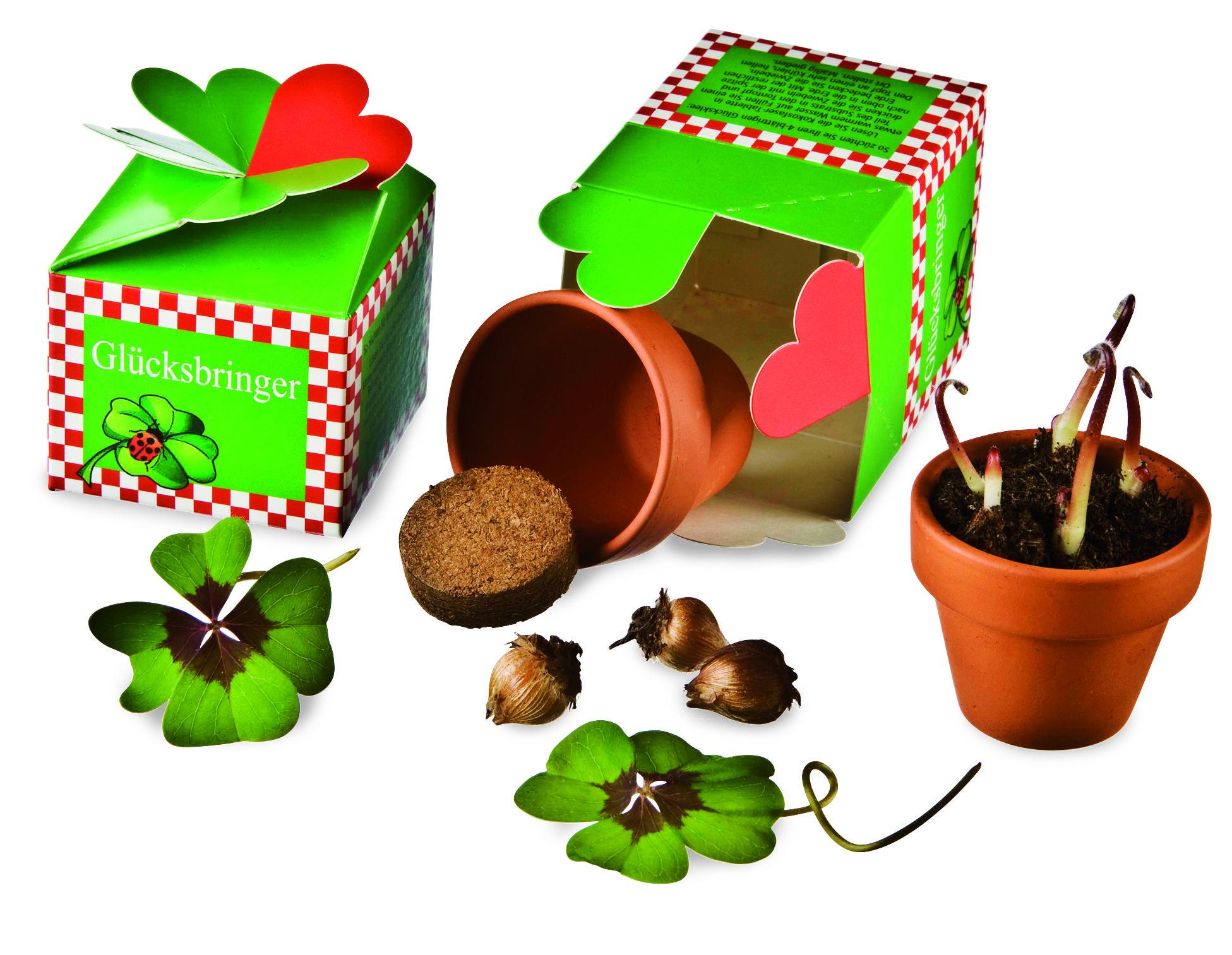 Glück aus der Schachtel Die immergrüne Schwarzerle ist als unverwüstlich und robust bekannt. Ihr Holz ist sehr wasserbeständig und färbt sich beim Abholzen rot. Jetzt können Hobbygärtner ihre eigene Schwarzerle ziehen und nach drei Wochen in den Garten pflanzen: mittels Aussaat-Set, bestehend aus einem Anzuchttopf, Saatgut, Dünger und zwei Substratscheiben. Tontopf: ca. 5 x 5 x 4 cm