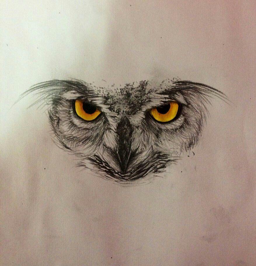 Owl Tattoo Ideas De Tatuajes Pinte