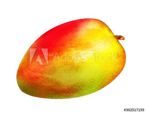 Watercolor mango on white background , #ad, #mango, #Watercolor, #background, #white #Ad