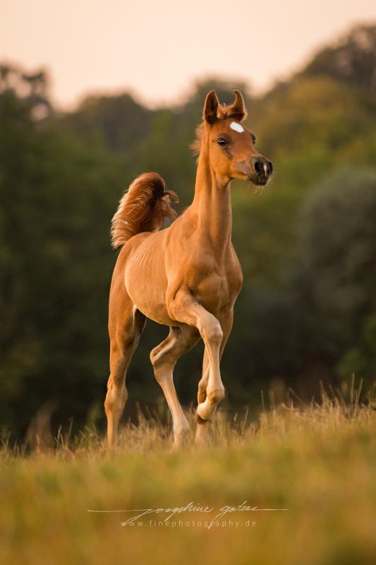 Photo of Horses |  Fine Photography