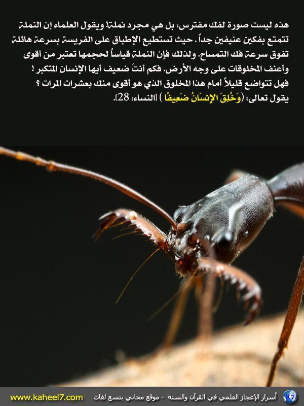 أسرار القرآن بالصور Insects Arabi Arthropods