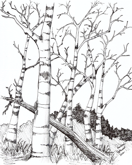 flower coloring pages birch trees by theemberravendeviantartcom on deviantart - Birch Tree Branches Coloring Pages
