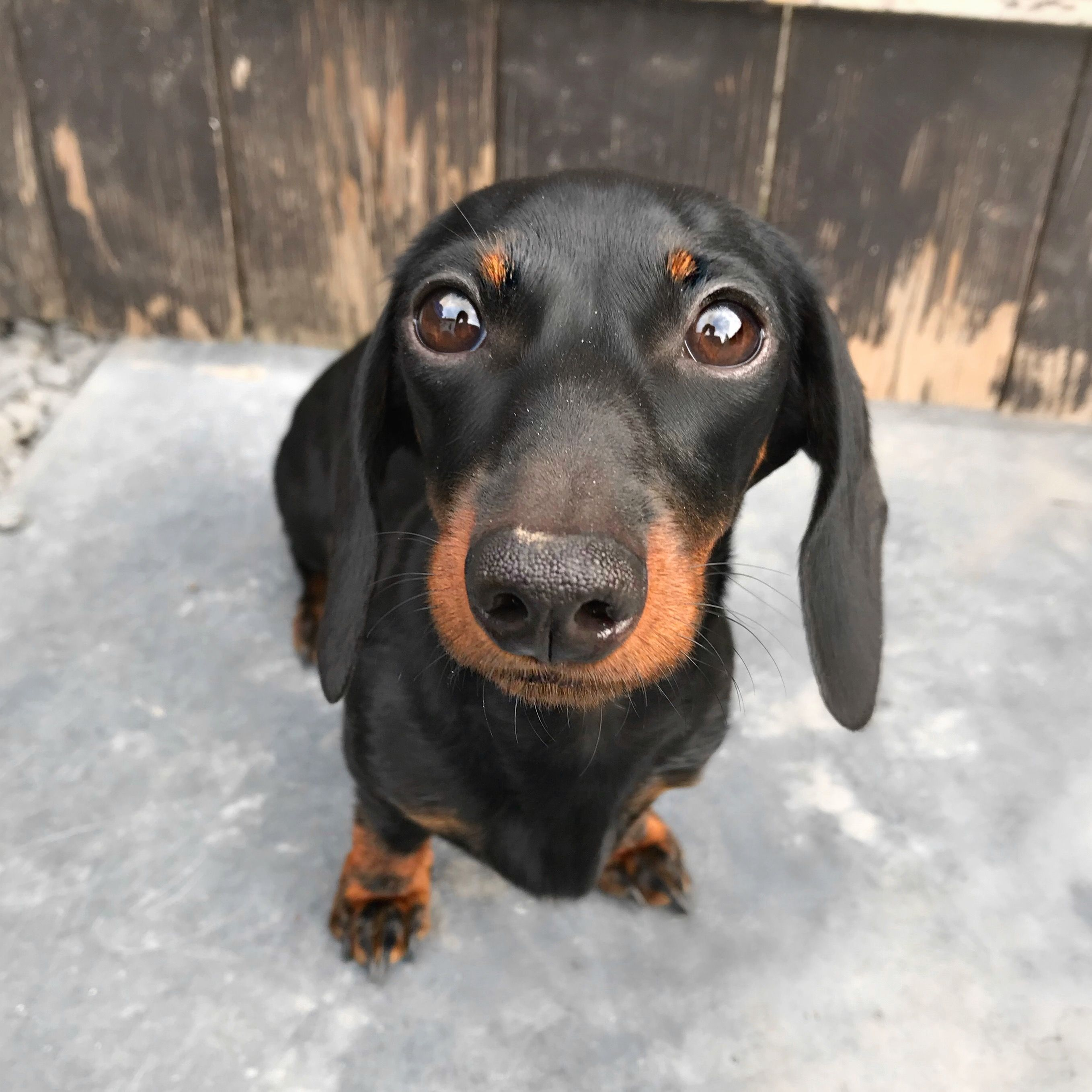Pin By Michelle Owens On Dachshund Items Best Dog Names Weenie