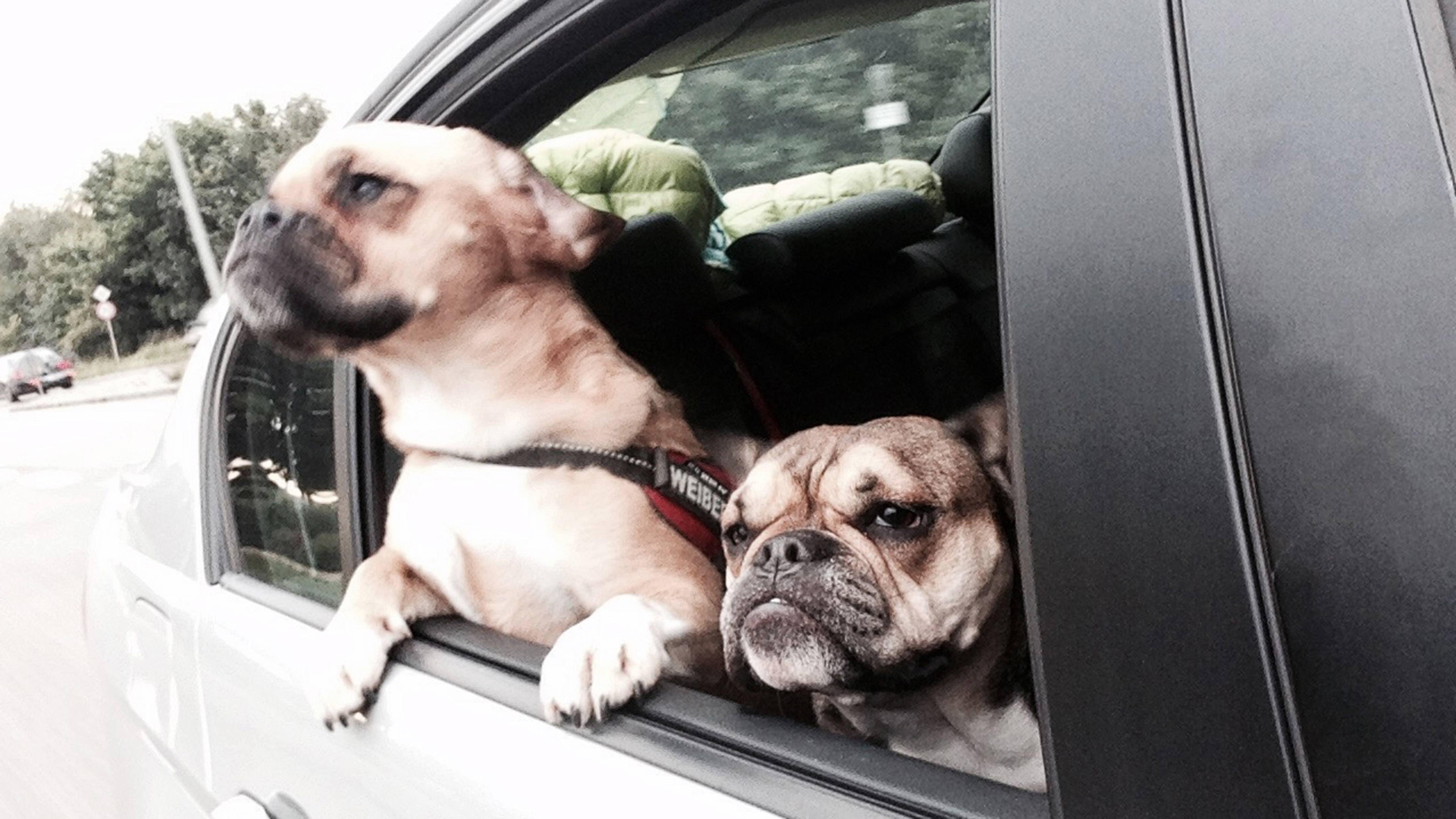 Alittlesomethingtosay Traveling With Your Dog Tirol 2016