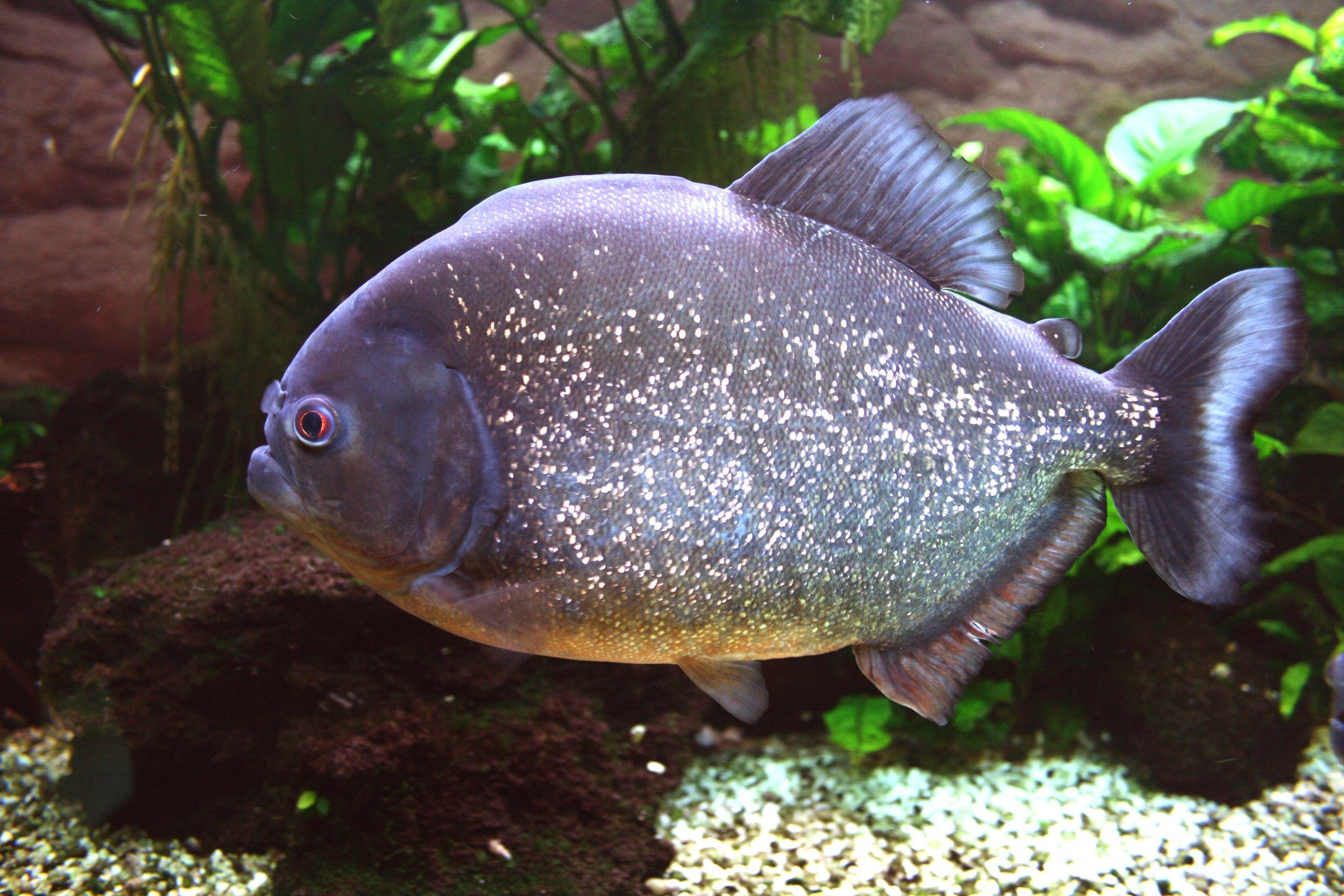 Pin On Amazon Species