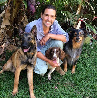Understanding Handling Dog Aggression Australian Dog Lover