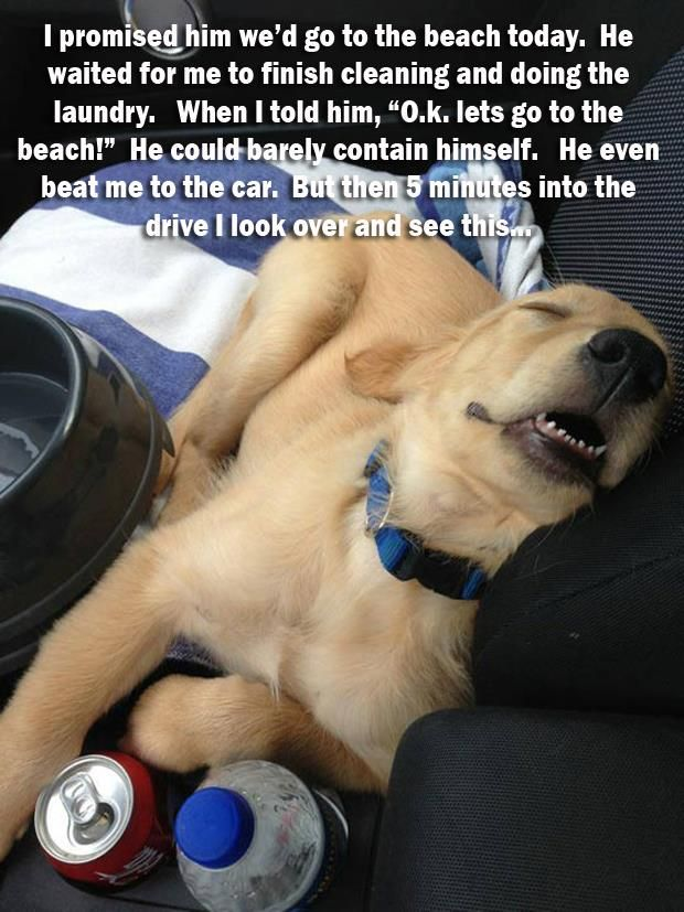 Attack Of The Funny Animals 41 Pics Cute Dogs Funny Animals