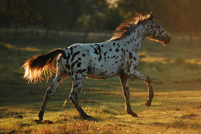 Spotted horse, may he was from Wyoming?
