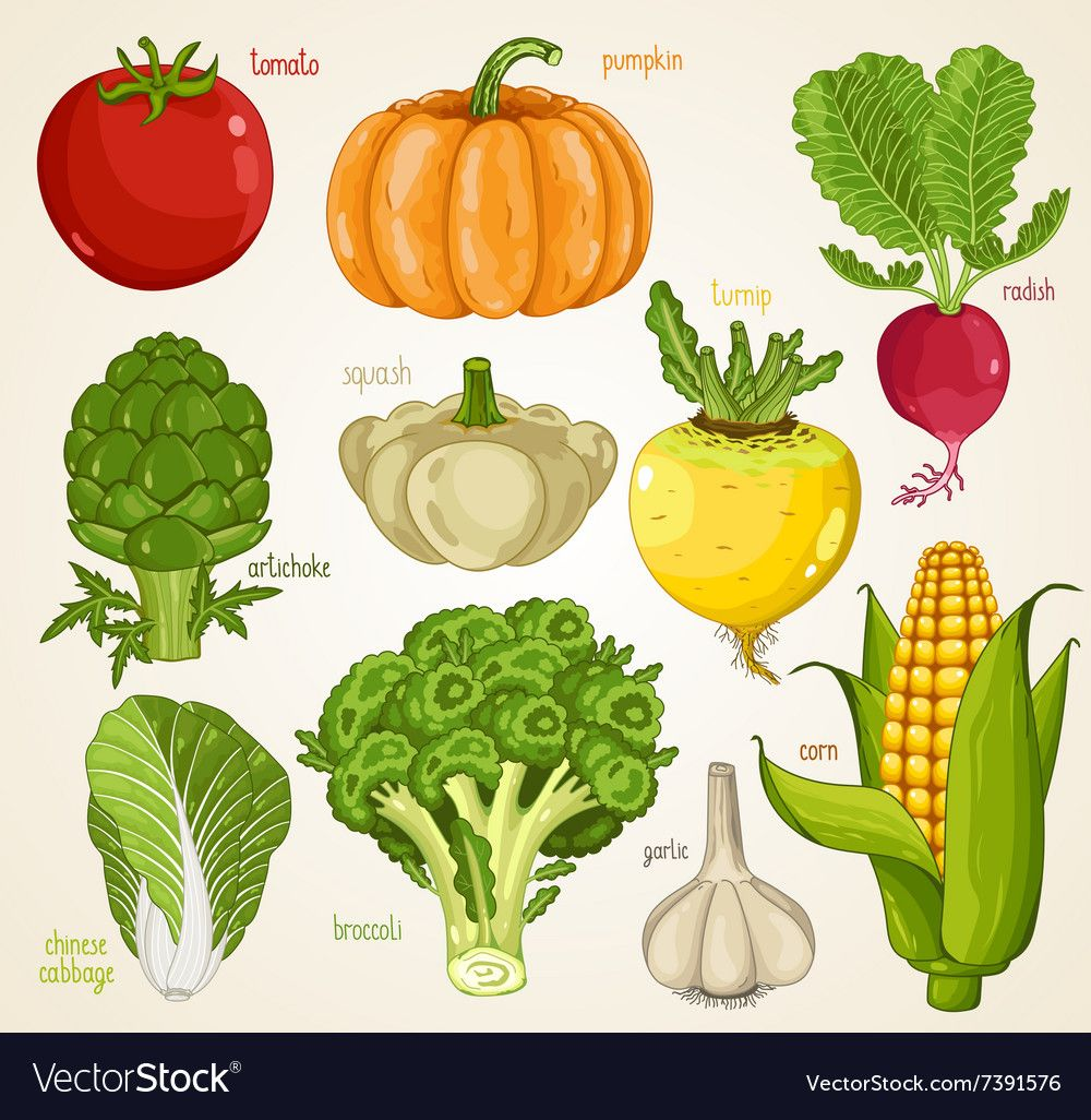 Vegetables Mix Organic Food Farm Food Vector Image On