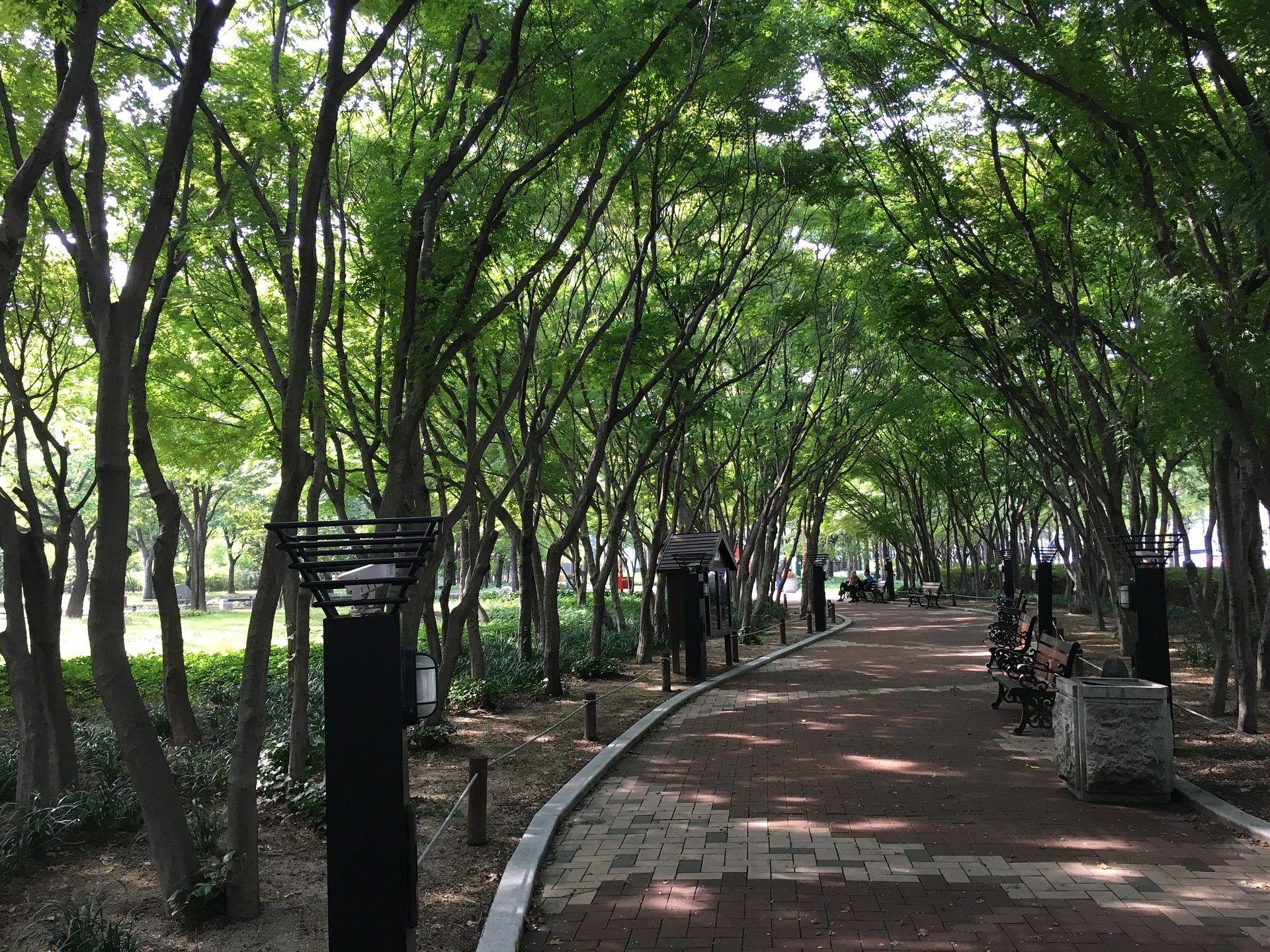 parque, árboles, camino, baldosas, daegu, 1703280837