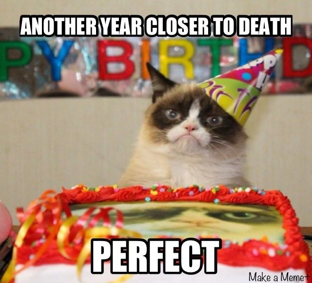 Unhappy Birthday Tardcat Humour Humour Chat Et Drôle