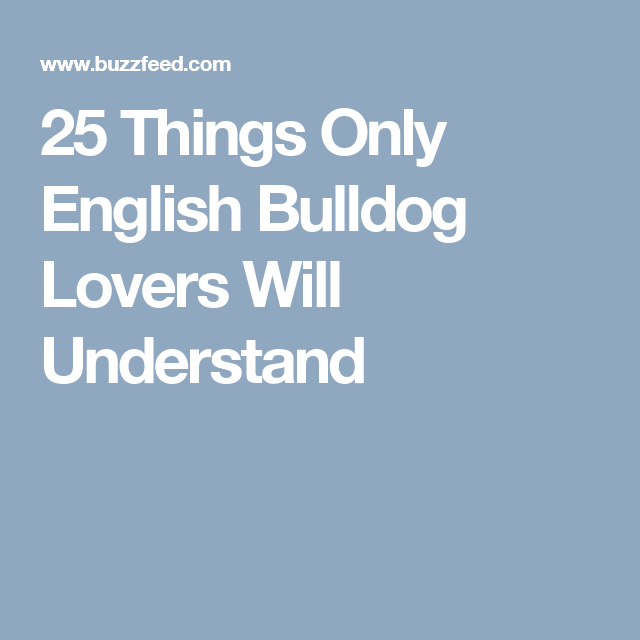25 Things Only English Bulldog Lovers Will Understand