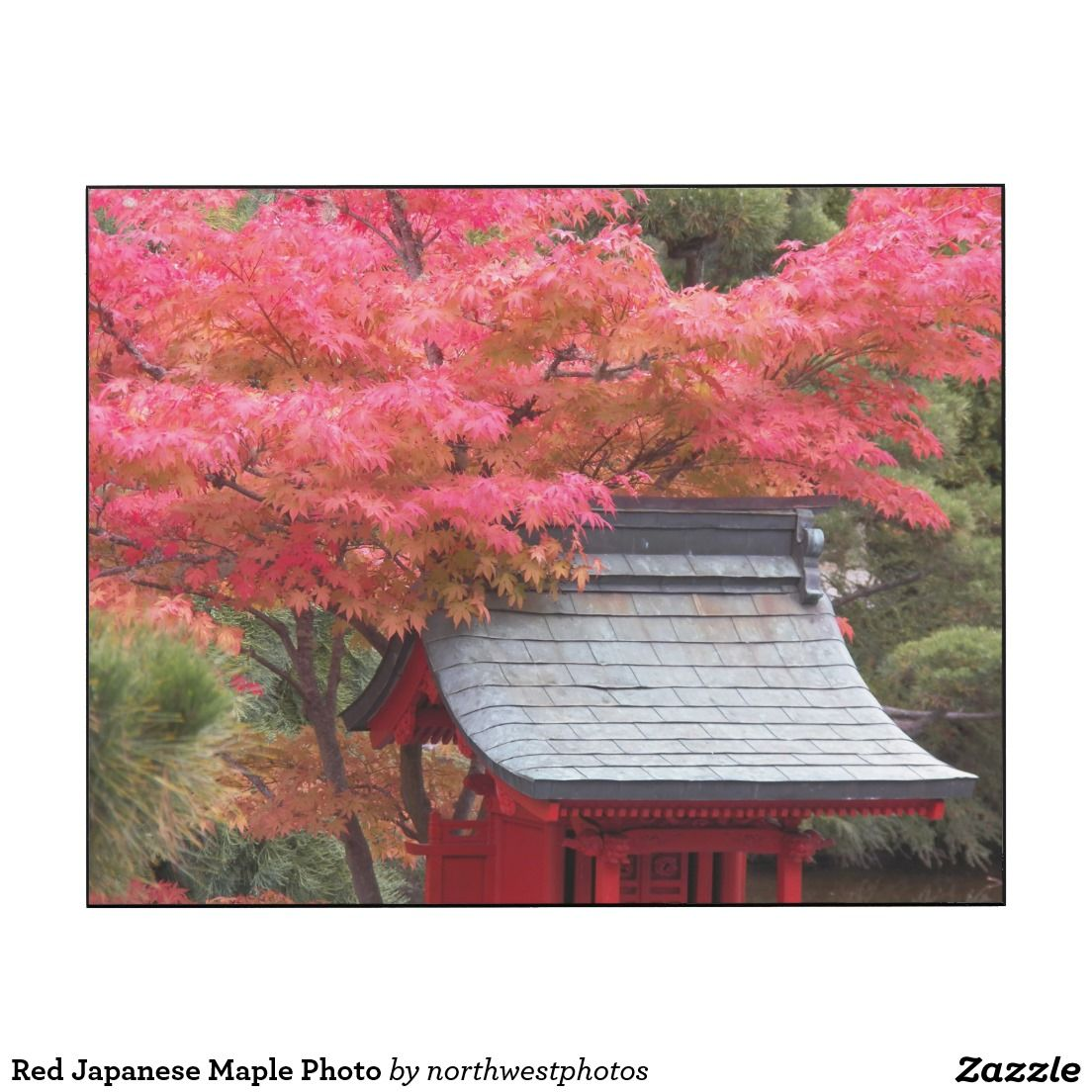 Red Japanese Maple Photo Wood Print