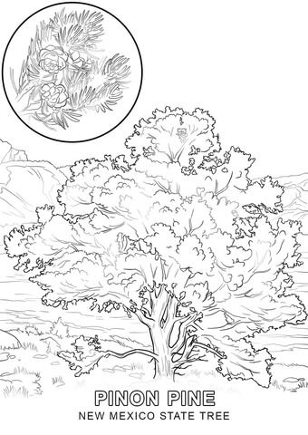 New Mexico State Tree Coloring Page From New Mexico Category
