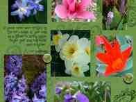 Azaleas in bloom and flowers beginning to bloom in pots