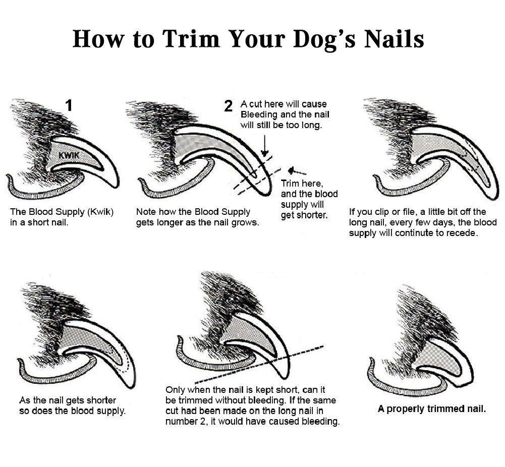Robot Check Dog Nails Trimming Dog Nails Cat Nail Clippers