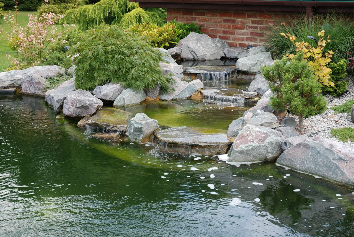 Koi pond construction plans koi pond portfolio 10000 for Garden pond design and construction
