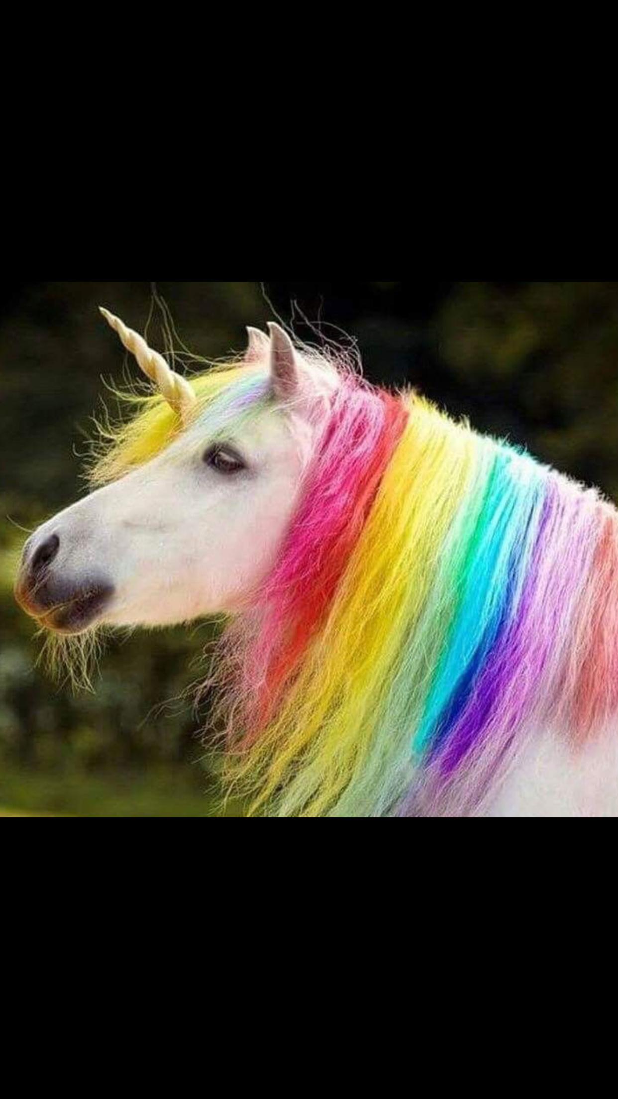 Картинки животных с радугой