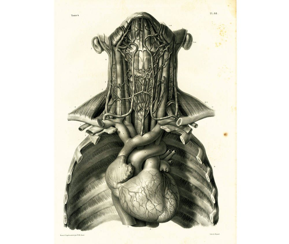 1836 Antique Heart Xl Print Heart Anatomy Illustration Poster