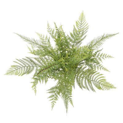 Bay Isle Home Artificial Mixed Meadow Fern Bush Desktop Foliage Plant | Wayfair -   13 table plants Png ideas
