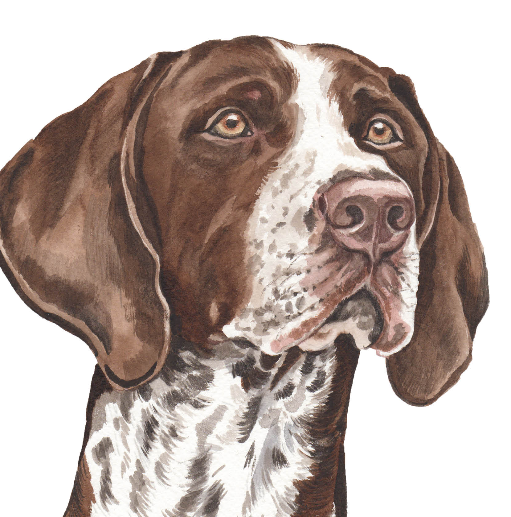 About Shorthaired German Sayings Pointer
