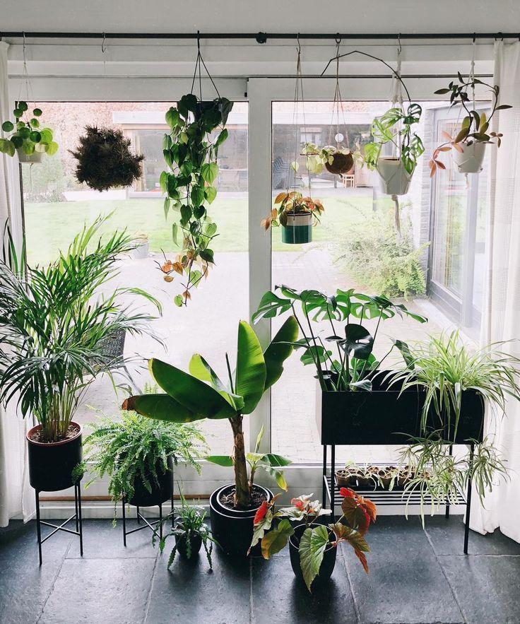 Gorgeous Display Of House Plants #green #greenery #plants #living