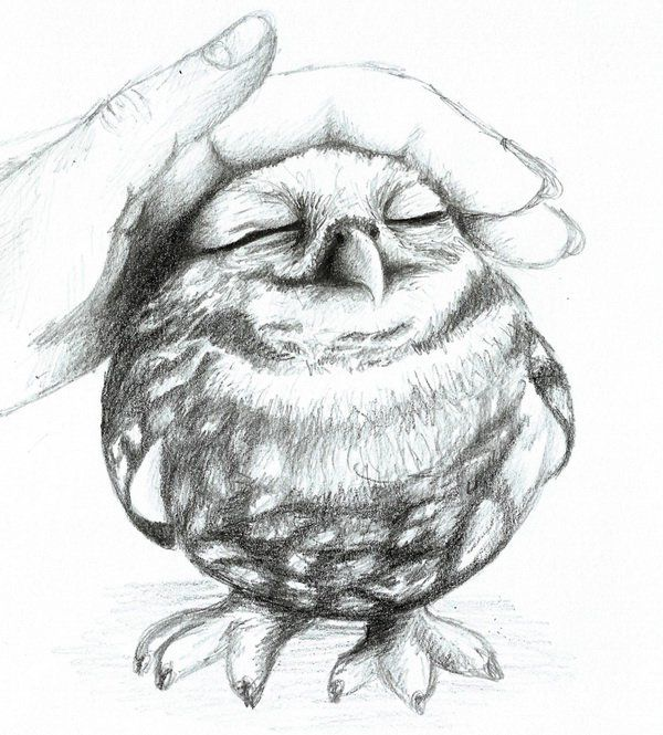 10 clever owl drawings for inspiration