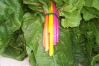 Swiss chard - dark silver and grey leaves and red or yellow stalks.