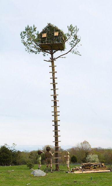 Real-life 'Moonrise Kingdom' treehouse