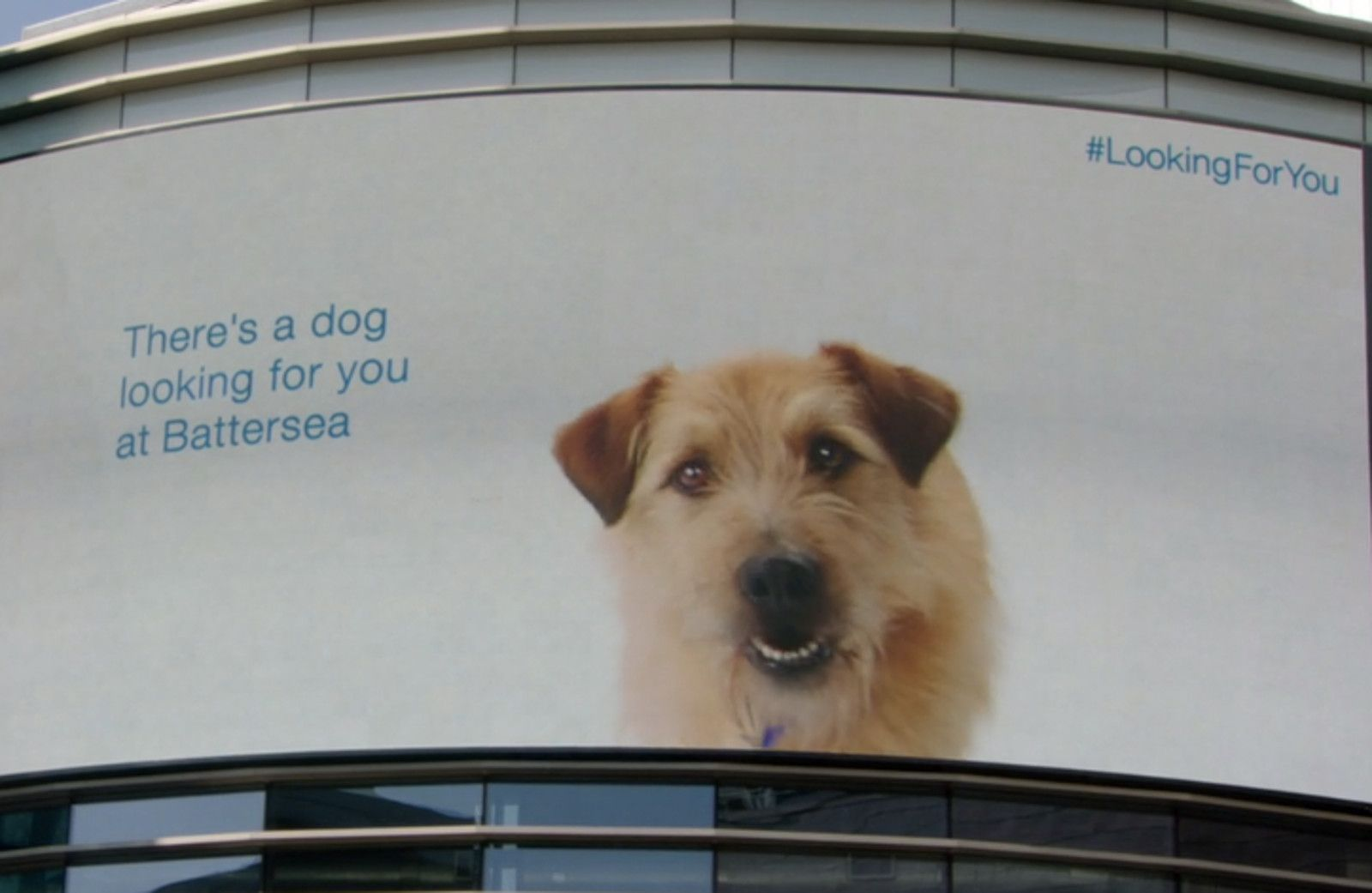 This Brilliant Pet Adoption Ad Follows Shoppers Around A Mall