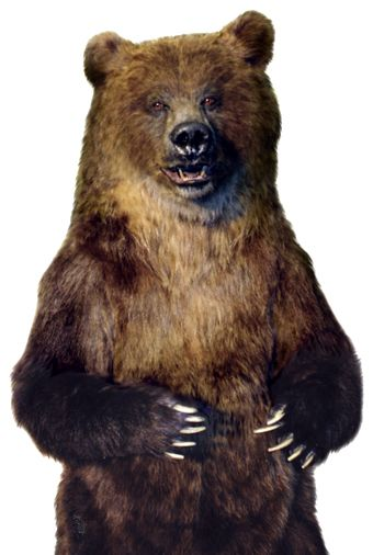 Image Result For Realistic Bear Costume