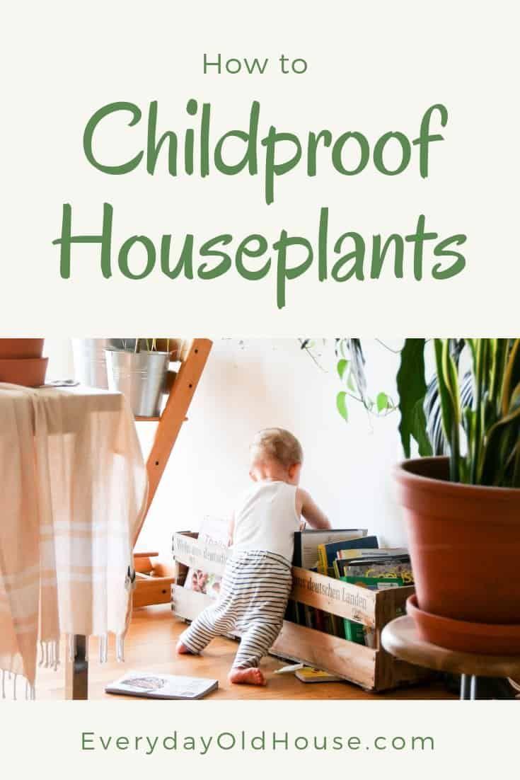 How to childproof houseplants petproof too