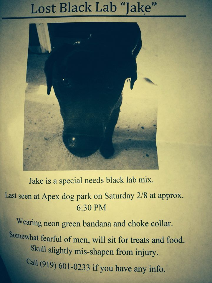 Jake Jake is a special needs dog in Apex, NC that has been missing since Saturday 2/8/14.  He is a black lab mix wearing a neon green bandana and has a mis-shapen skull.  He was last spotted Thursday February 13th around 1pm at Ashley Downs subdivision off of Olive Chapel Road in Apex.  He is VERY skittish and will run if you try to approach if!  If you spot him, please call his foster mom at 919-601-0233 and leave some food out for him!  Please share so we can get Jake Jake home safe!!!!