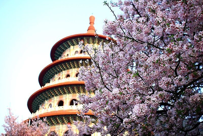 The Best Spots To See Cherry Blossoms In Taiwan Places To See Cherry Blossom New Taipei City