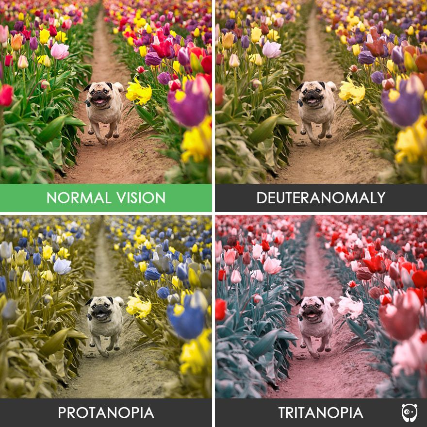 You Ll Be Amazed How People With Color Blindness See The World 57