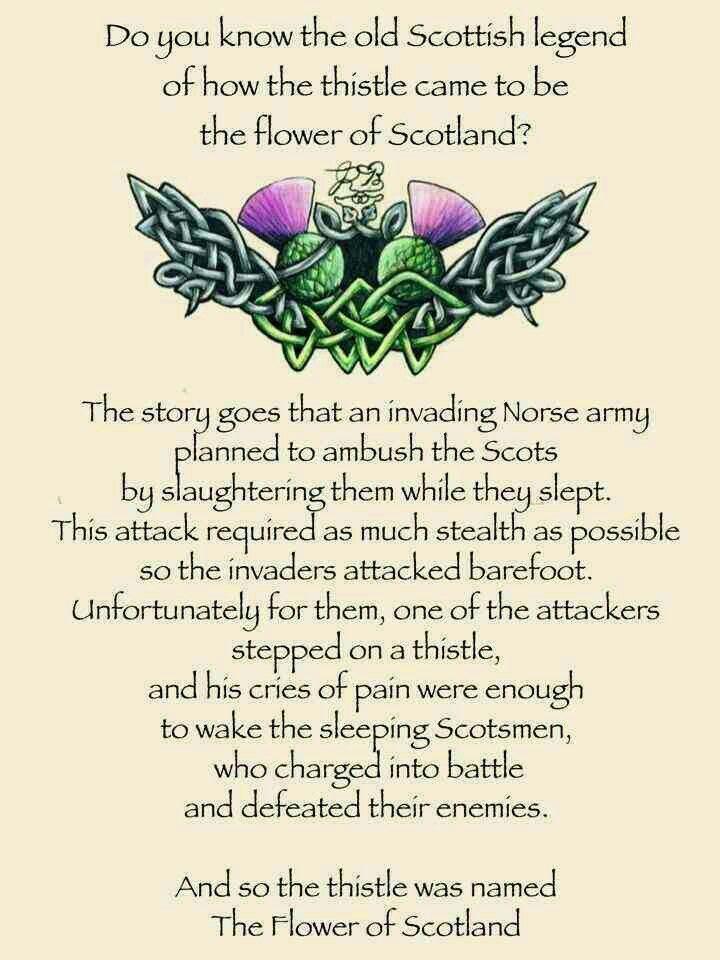 Scottish legend of the thistle | Legends, Mythology ...