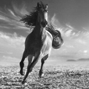 Tb _11096 Häst