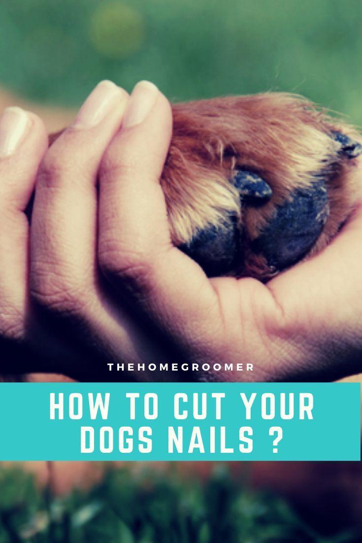 Pin on dog grooming tips