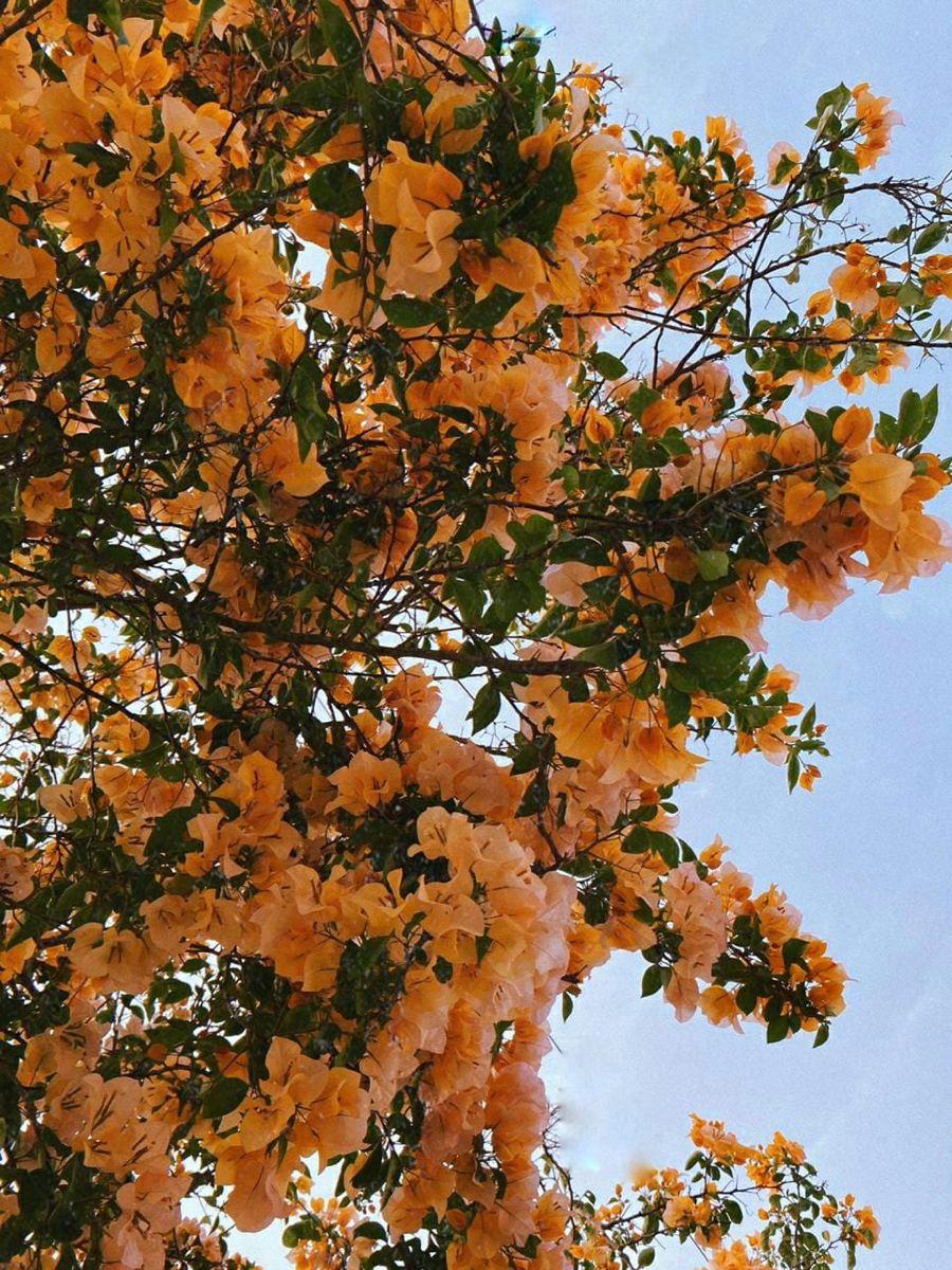 Arbol Flora Fauna Grapes