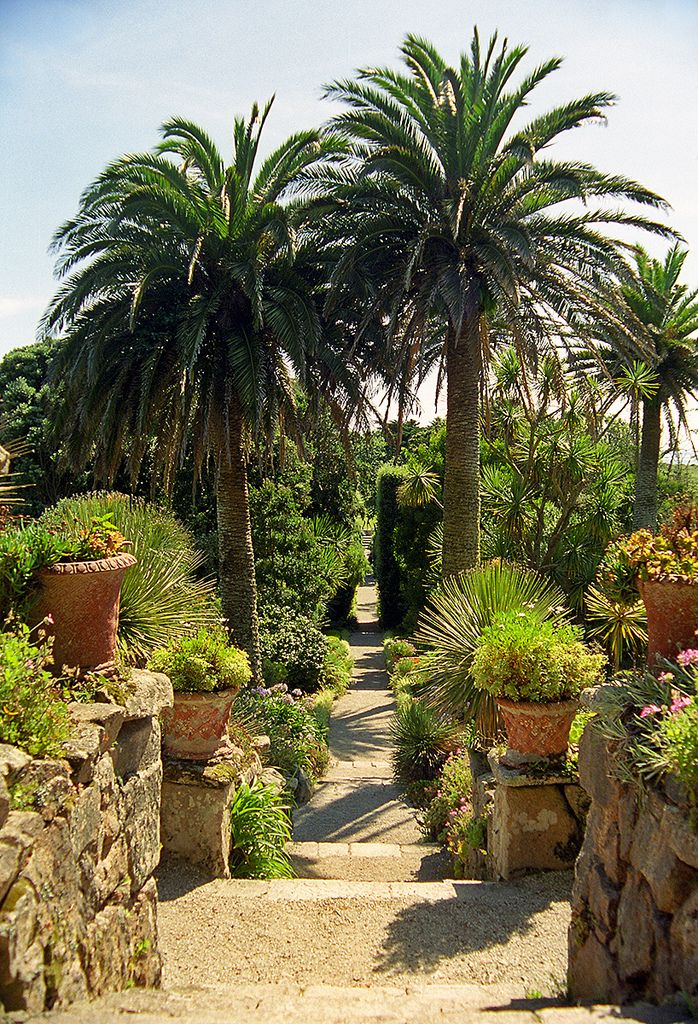 Tresco Abbey Gardens, Scilly Isles, UK | A superb Sub ...