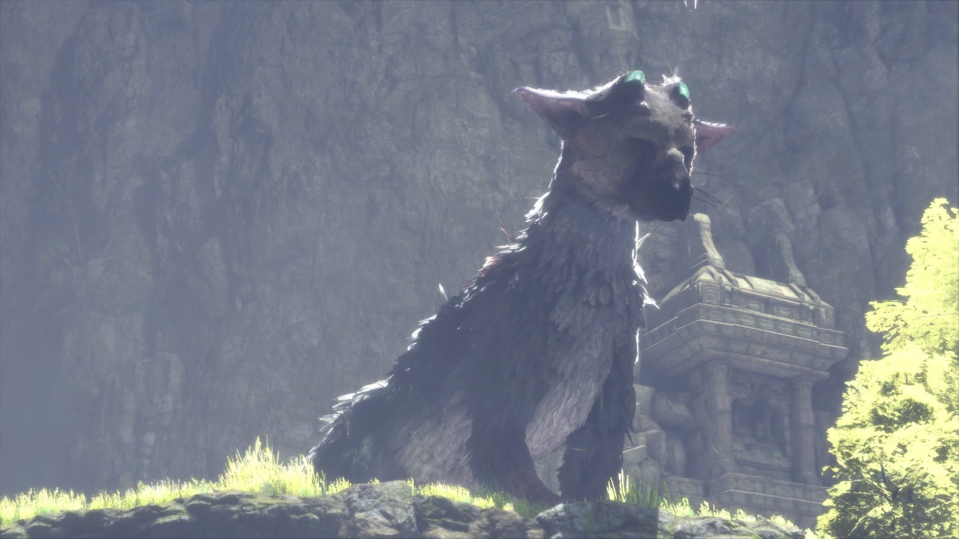 Best The Last Guardian Trico Wallpapers Hd The Last Guardian