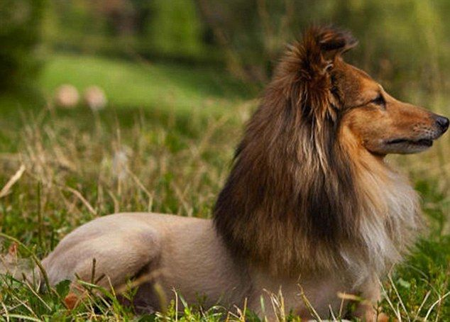 The Little Big Cats Animal Haircuts Craze Sees Pets Turned Into