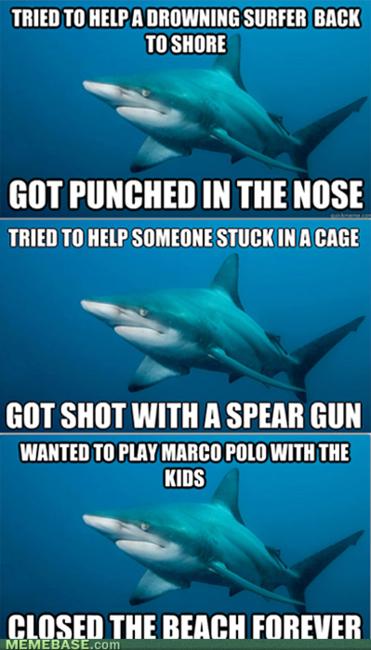 Poor Shark Http Imgfave Com View 2248917 Misunderstood Shark Sharks Funny Shark Meme