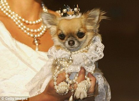 Dog Owners Who Dress Up Their Pets Could Face Prosecution Pet