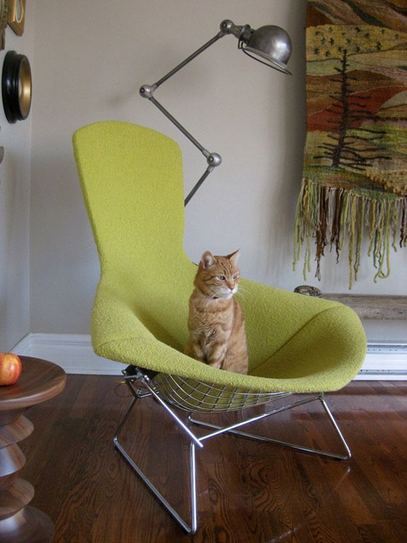Mondayu0027s Pets On Furniture   Bongo In A Birdchair! Desiretoinspire.net